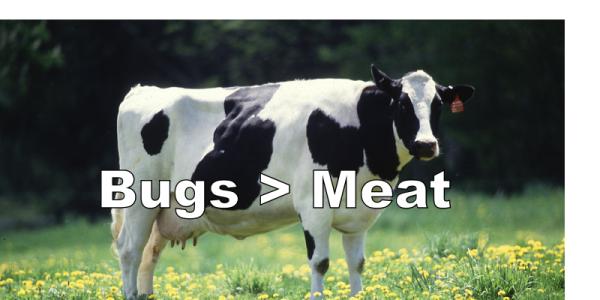 Bugs Vs Cows