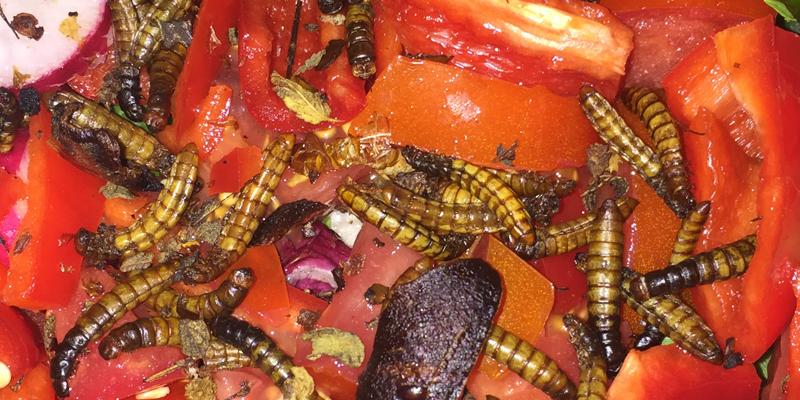 Reinvent Entomophagy