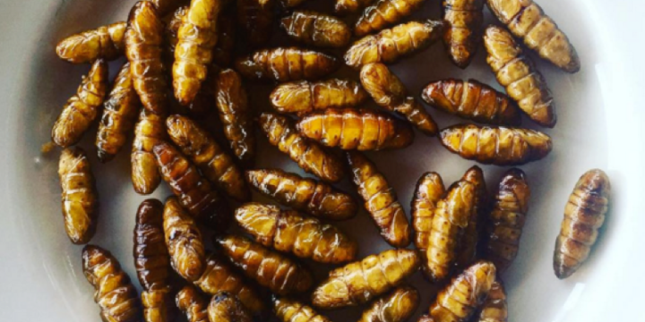 """Insects, Italian Cuisine, and """"NaturalRemedies"""""""